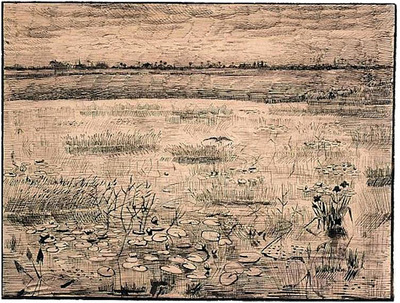 a marsh with water lillies