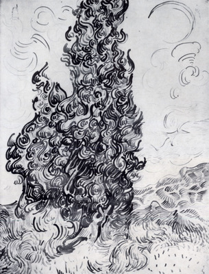 cypresses study
