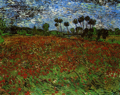 fields with poppies