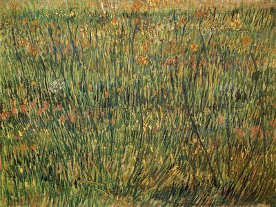 Pasture in Bloom