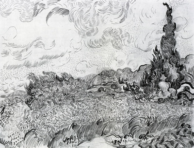 wheat field with cypresses at the haude galline near eygalieres study