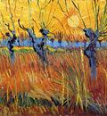 pollard willow with setting sun