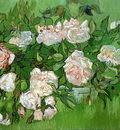 still life  pink roses