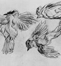 studies of a dead sparrow