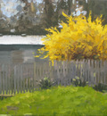 BackYard YellowBush