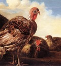 CUYP Aelbert Domestic Fowl