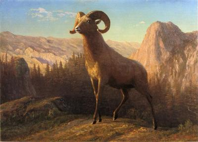 Bierstadt Albert A Rocky Mountain Sheep Ovis Montana