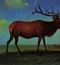 Bierstadt Albert Elk