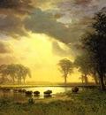 Bierstadt Albert The Buffalo Trail