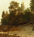 Bierstadt Albert The Fallen Tree