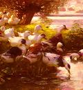 Koester Alexander Max Ducks On A Lake