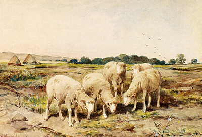 Mauve Anton Grazing Sheep