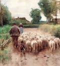 Mauve Anton Bringing Home The Flock