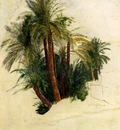 Lear Edward Study Of Palm Trees