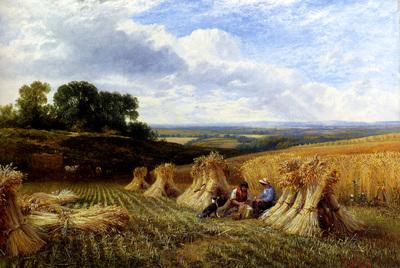 Cole George Harvest Field