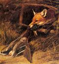 Hardy Heywood Returning To The Foxs Lair