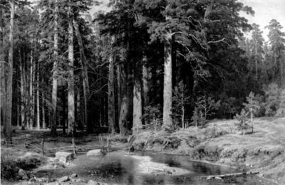 Shishkin Ivan Mast Tree Grove