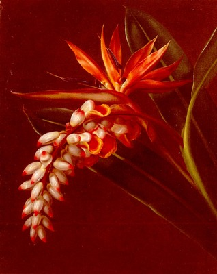 Jensen Johan Laurentz Bird Of Paradise