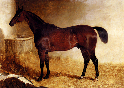 Herring John Frederick Flexible A Chestnut Racehorse In A Loose Box