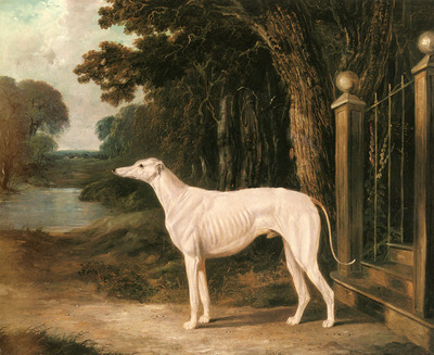 Herring Snr John Frederick Vandeau A White Greyhound
