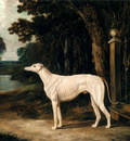 Herring John Frederick Vandeau A White Greyhound