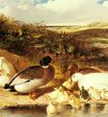 Herring Sr John Frederick Mallard Ducks and Ducklings On A River