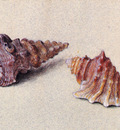 Ruskin John Study of Two Shells