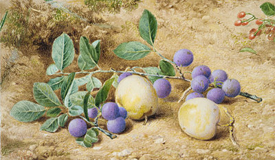 Hill John William Plums
