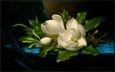 Giant Magnolias on a Blue Velvet Cloth NGA