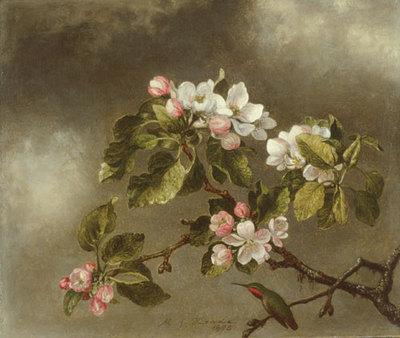 Heade Martin Johnson Hummingbird And Apple Blossoms