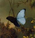 Blue Morpho Butterfly ATC