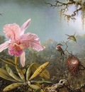 Cattelya Orchid and Three Brazilian Hummingbirds CGF
