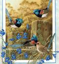 p australian birds cal2003
