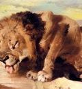 Landseer Sir Edwin Lion Drinking At A Stream