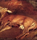 Landseer Sir Edwin Study Of A Dead Stag