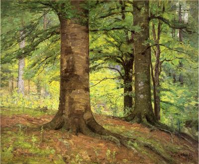 Steele Theodore Clement Beech Trees