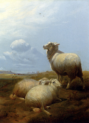 Cooper Thomas Sidney Sheep At Pasture