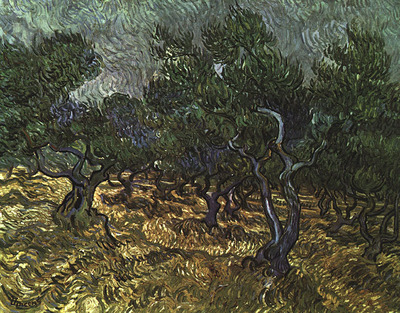 van gogh vincent the olive grove