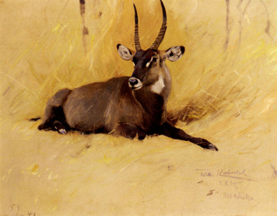 Kuhnert Wilhelm Friedrich A Common Waterbuck