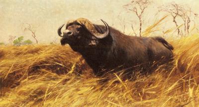 Kuhnert Wilhelm Friedrich An African Buffalo