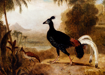 Daniell William The Fire Pheasant Of The Island Of Java