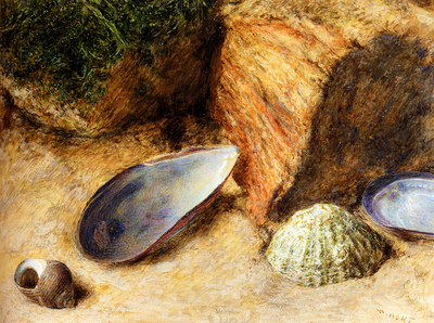 Hunt William Henry Still Life With Sea Shells On A Mossy Bank