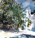 Homer Winslow Orange Tree Nassau aka Orange Trees and Gate