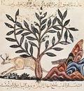 irakischer maler des kraeuterbuchs des dioskurides