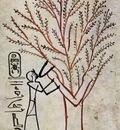 maler der grabkammer des thutmosis iii