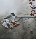 Robin Murray Winter Freeze-Chickadee