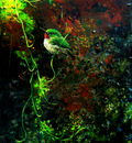 "ROBIN MURRAY "" Green Tody River Bank"""