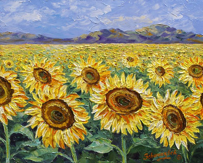 sunflower fields right
