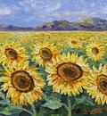 sunflower fields right