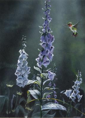 Red Throated hummingbird